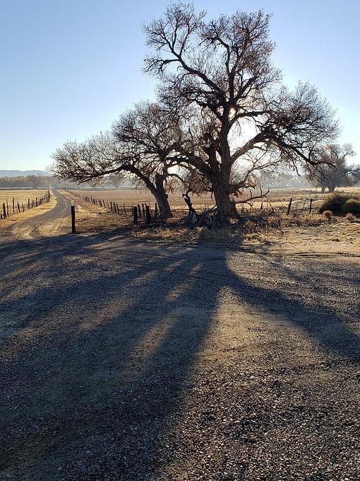 cottonwood and lane.jpg