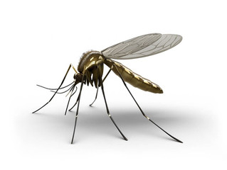 Are you a mosquito?