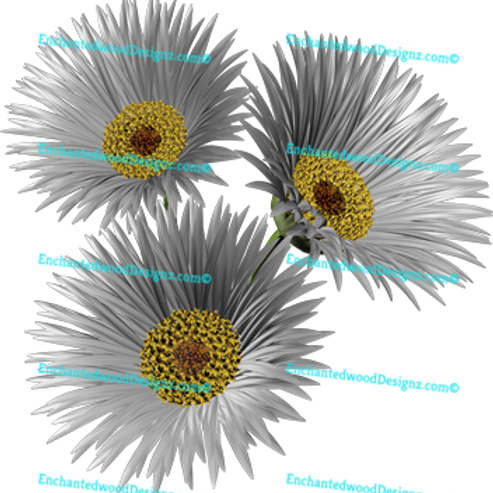 Gerber Daisy flowers