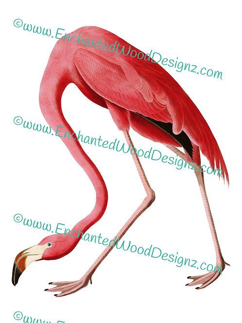 American Flamingo Simple Applique