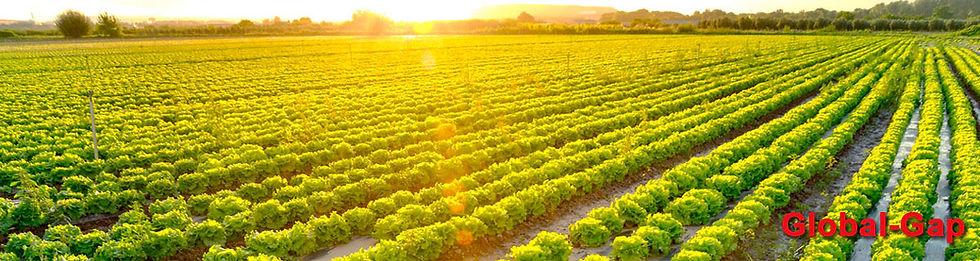 Organic Certification, Global GAP Certification