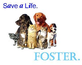foster_animals.jpg