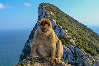 Barbary-macaque-Rock-of-Gibraltar.jpg.63