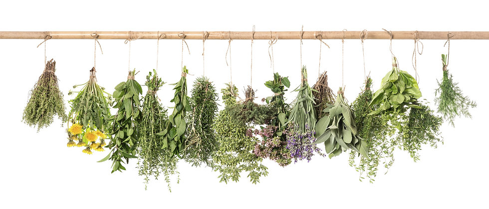 Fresh%20herbs%20hanging%20isolated%20on%