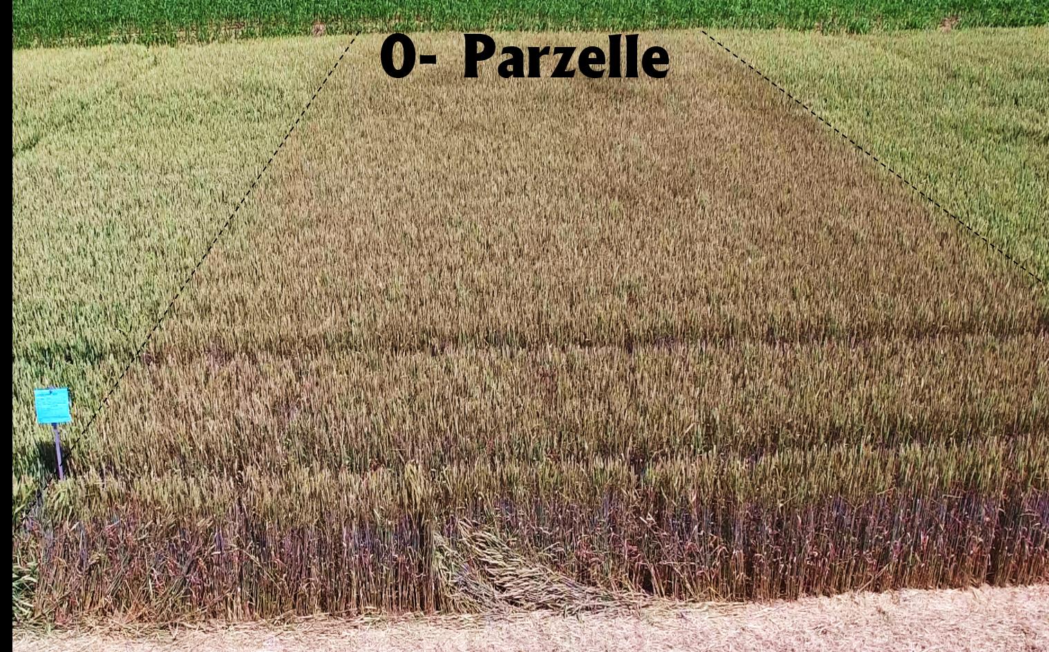 0-Parzelle