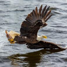 action-animal-avian-732096.jpg