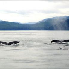 whales-19192_1280.jpg
