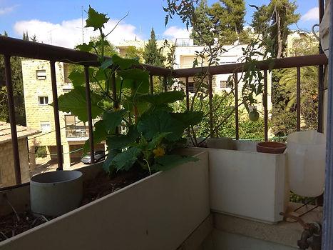 balcon.jpeg