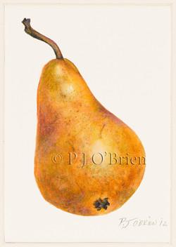 D'Anjou Pear.jpg