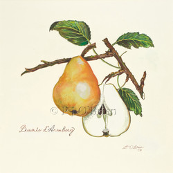 Jennifer's Pear.jpg