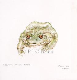 Colorado River Toad.jpg