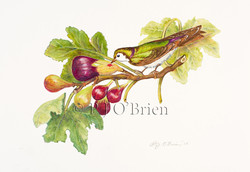 Violet - Green Swallow and Fig.jpg