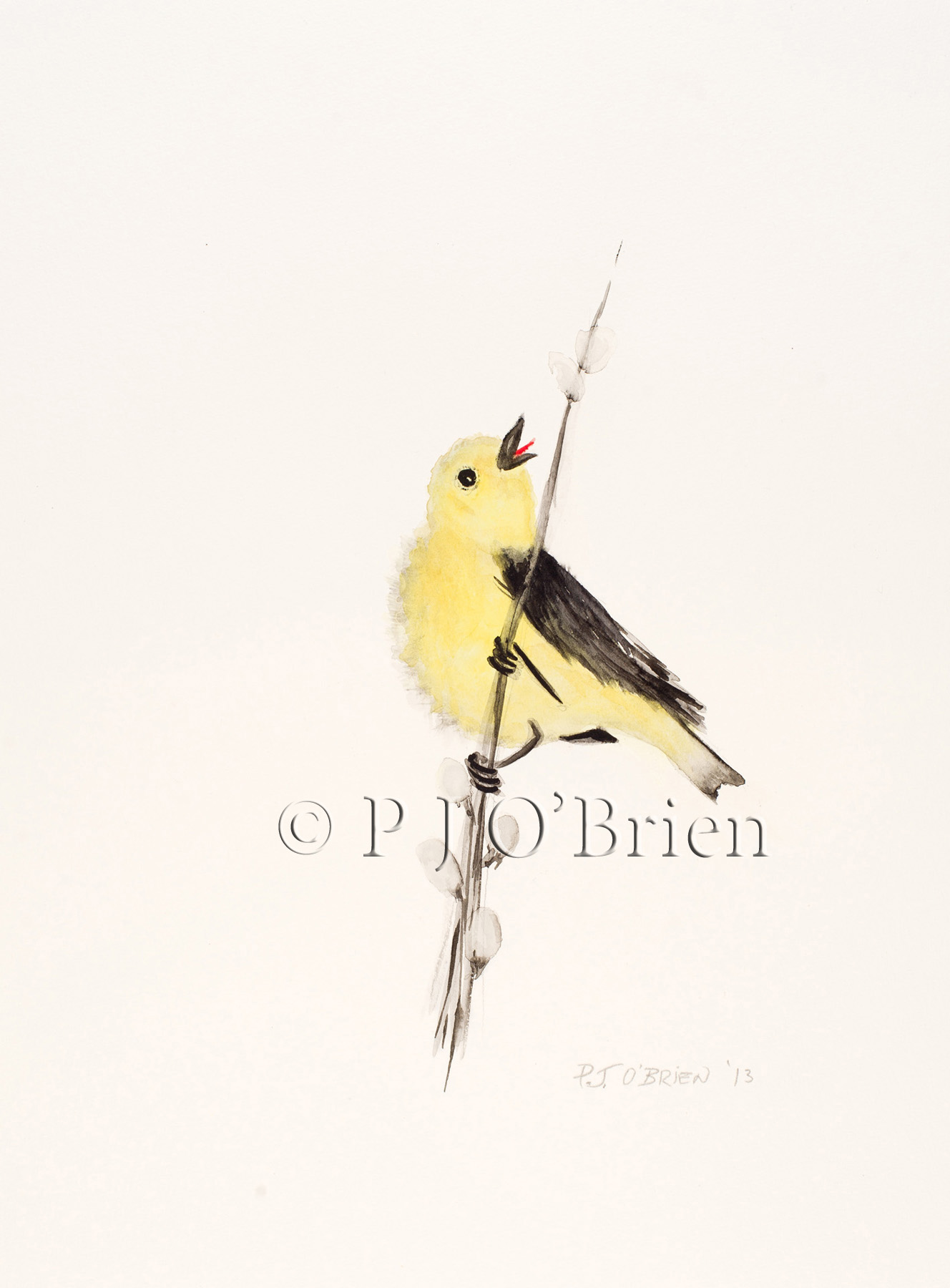 Prothonatory Warbler.jpg