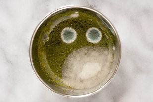 mould-on-green-chutney-2-1-Blog-2.jpg