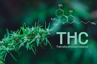 Cannabis, cannabinol, Cannabidiol, Tetra