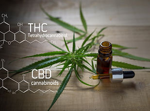 Medicinal cannabis with extract oil in a