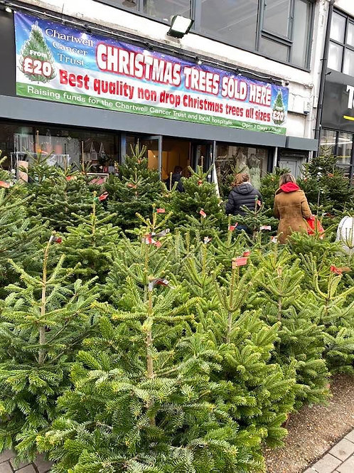 3-4ft Christmas Tree on Wooden Block
