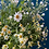 Thumbnail: Filled with Daisy's