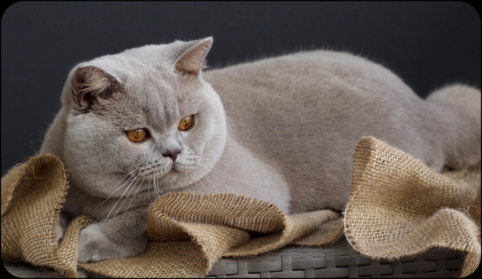 вязка котов с картинками завод