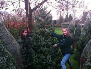 Kerstbomen verkoop 2015