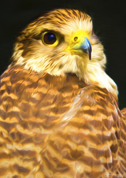 Hawk 2 No Edge.jpg