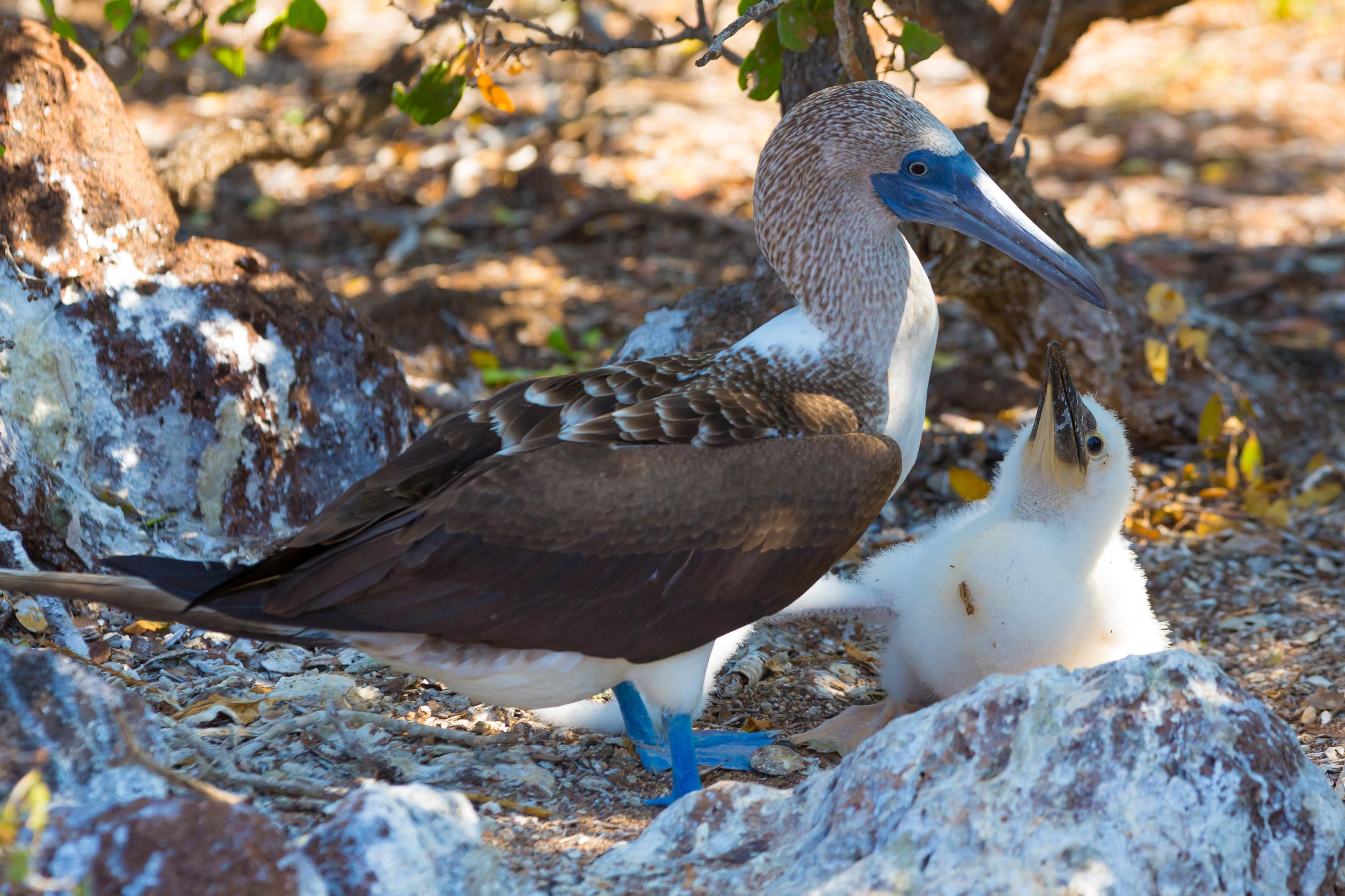 Galapagos (5 of 27).jpg