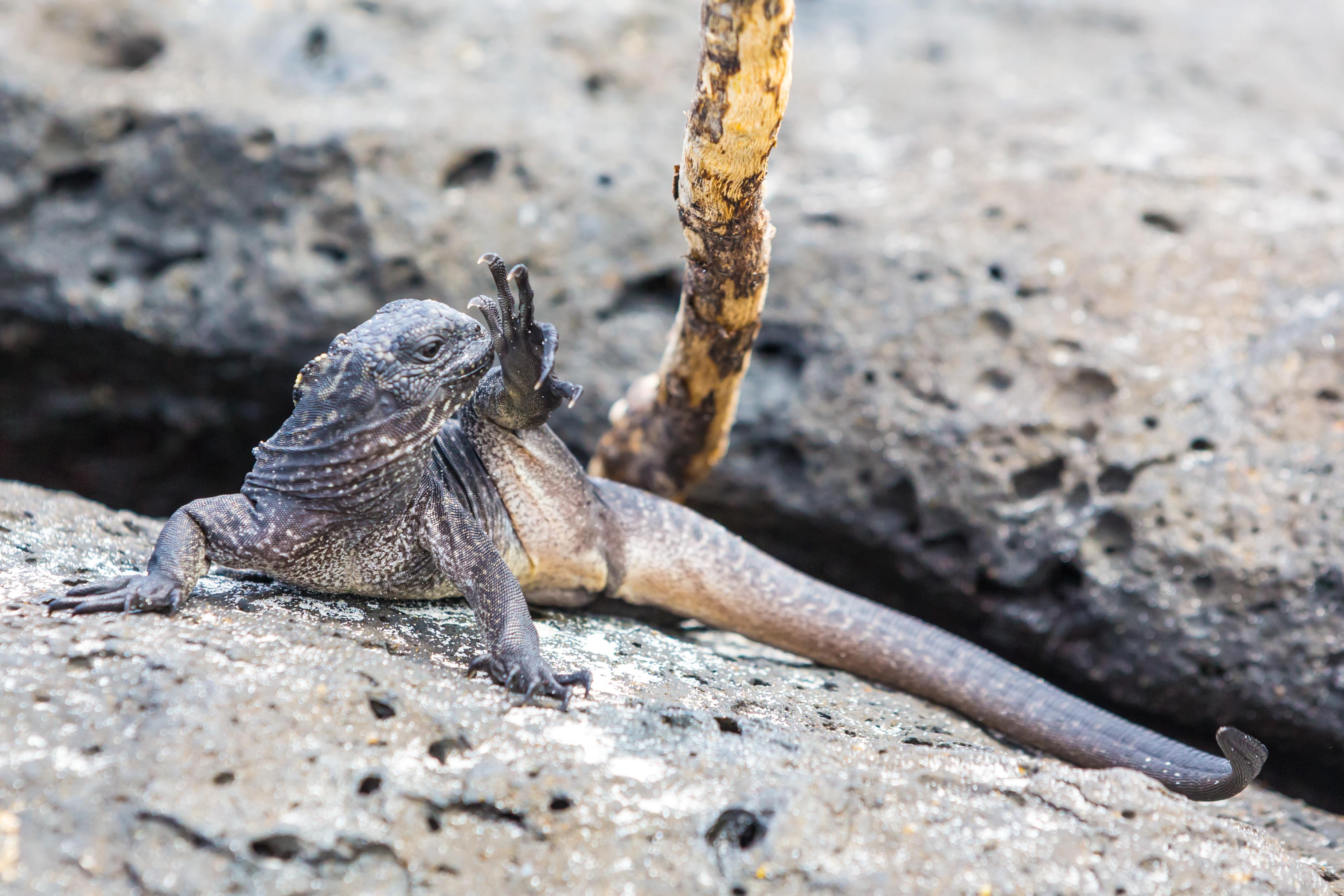 Galapagos (18 of 27).jpg