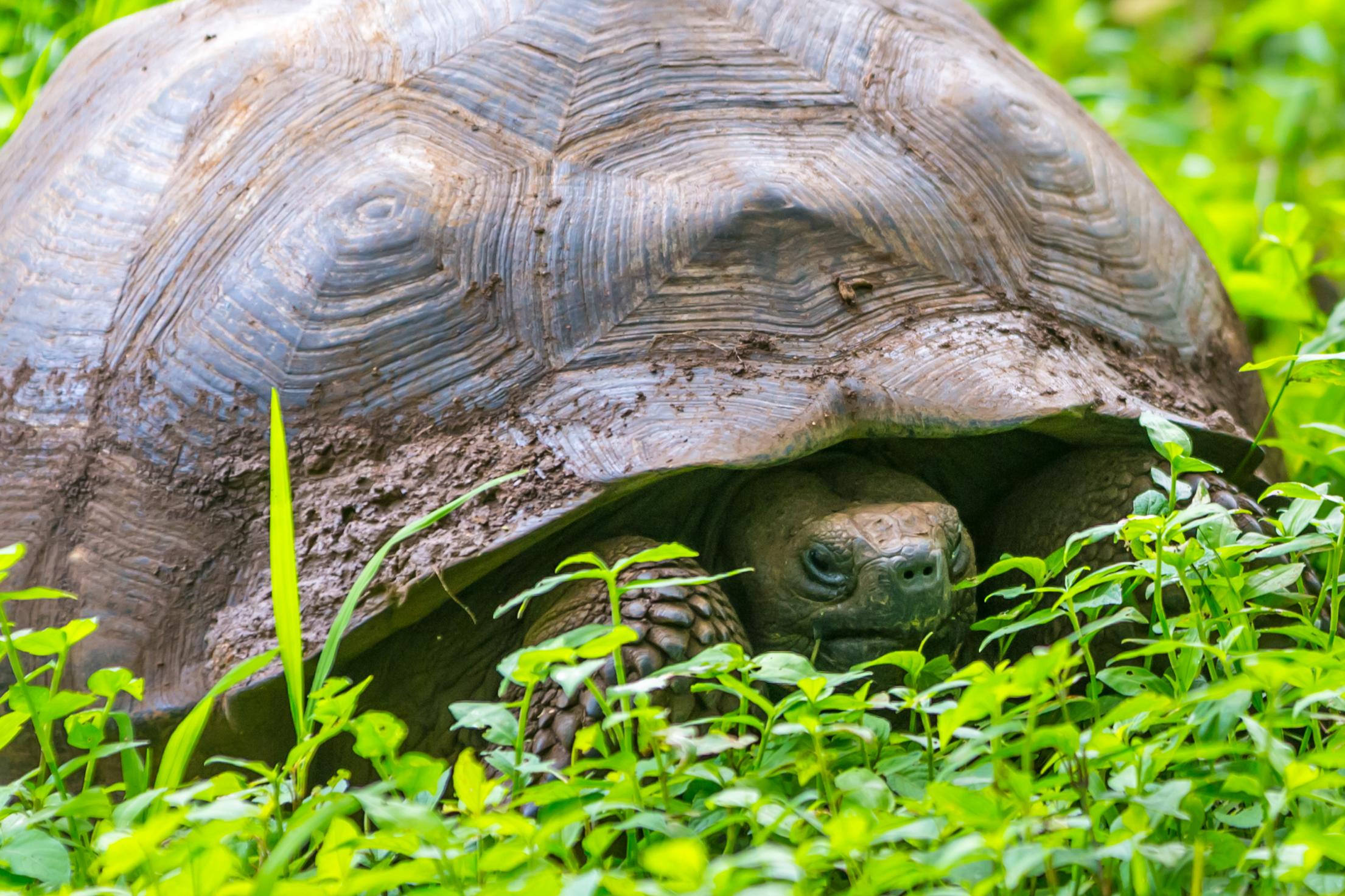 Galapagos (19 of 27).jpg