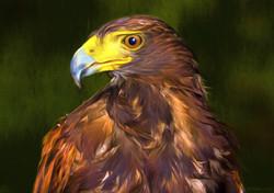 Hawk 5 No Edge.jpg