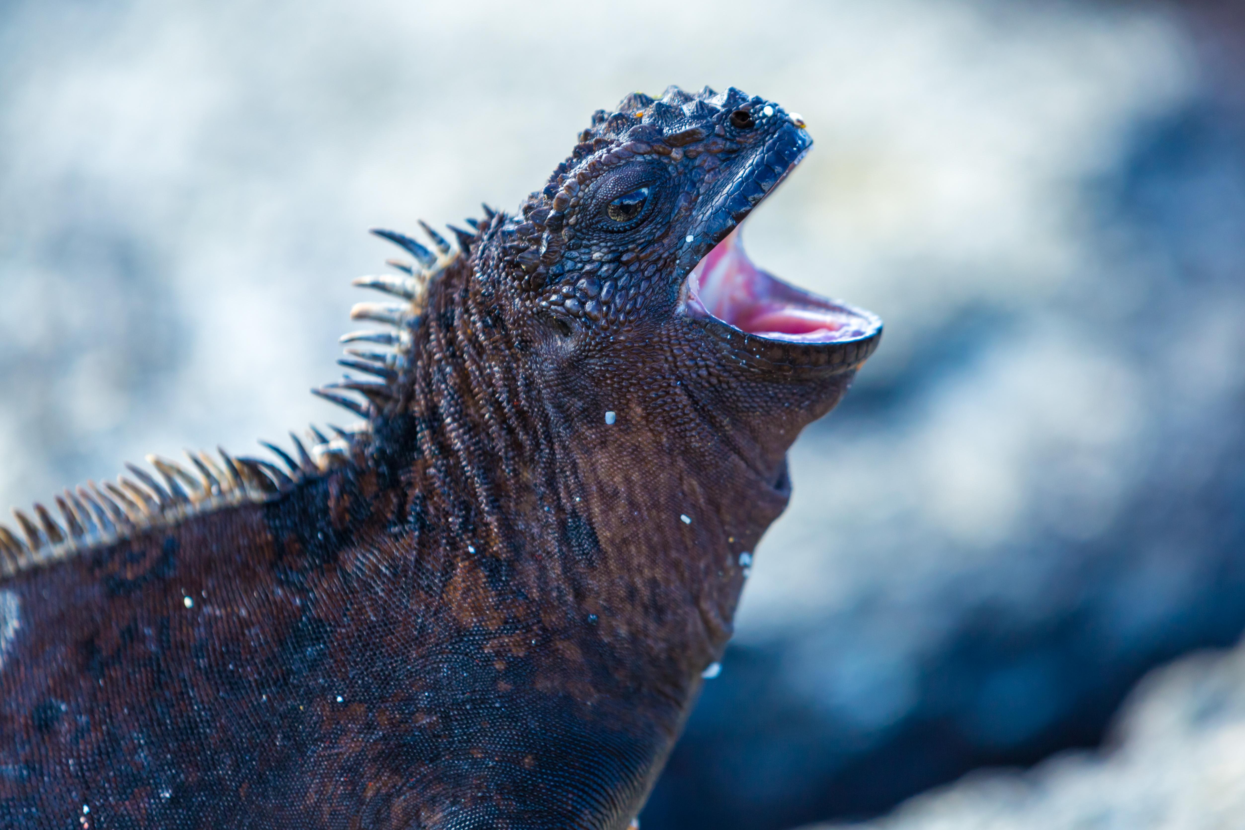 Galapagos (12 of 27).jpg