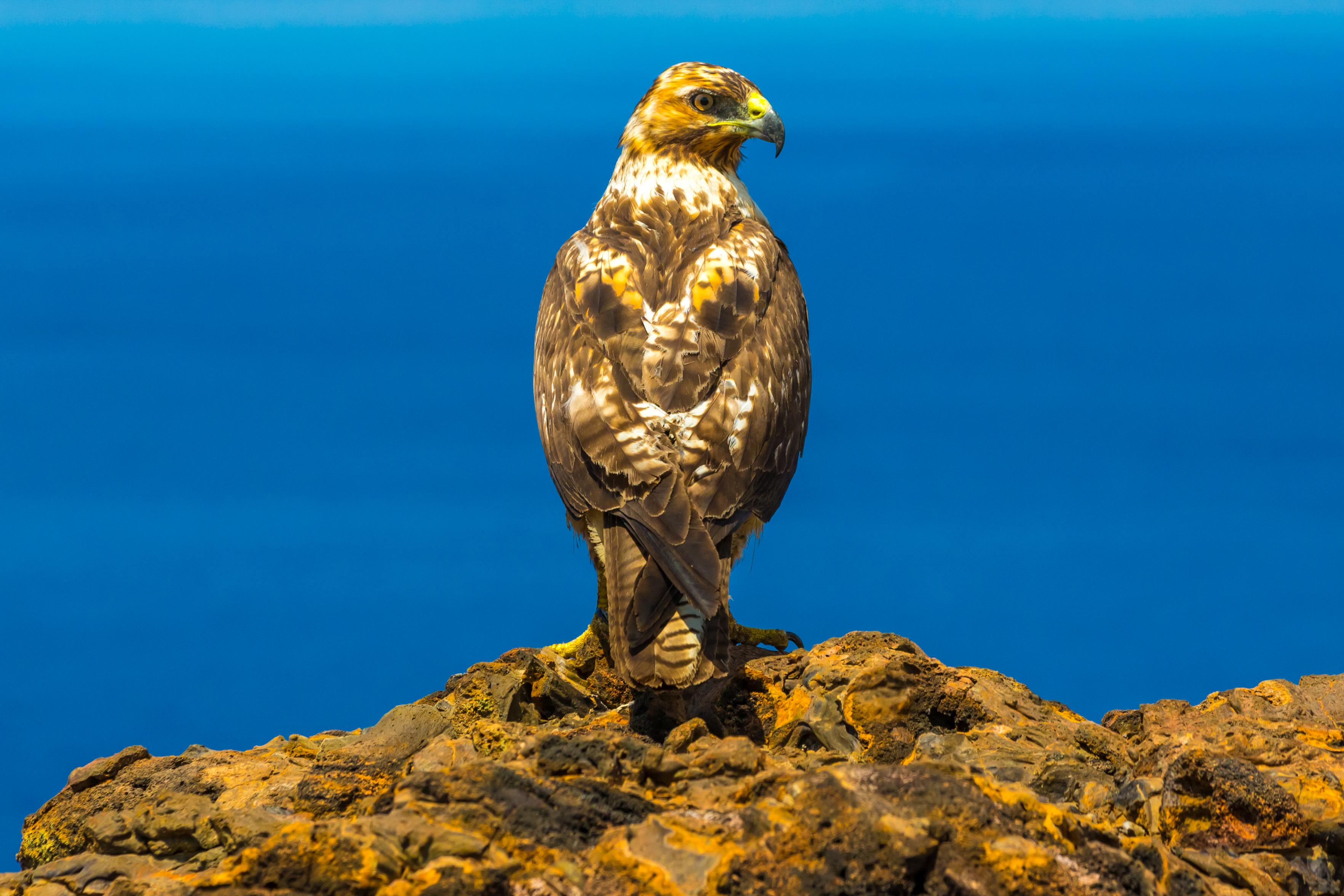 Galapagos (24 of 27).jpg