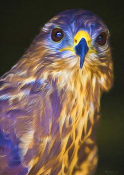 Hawk 1 No Edge.jpg