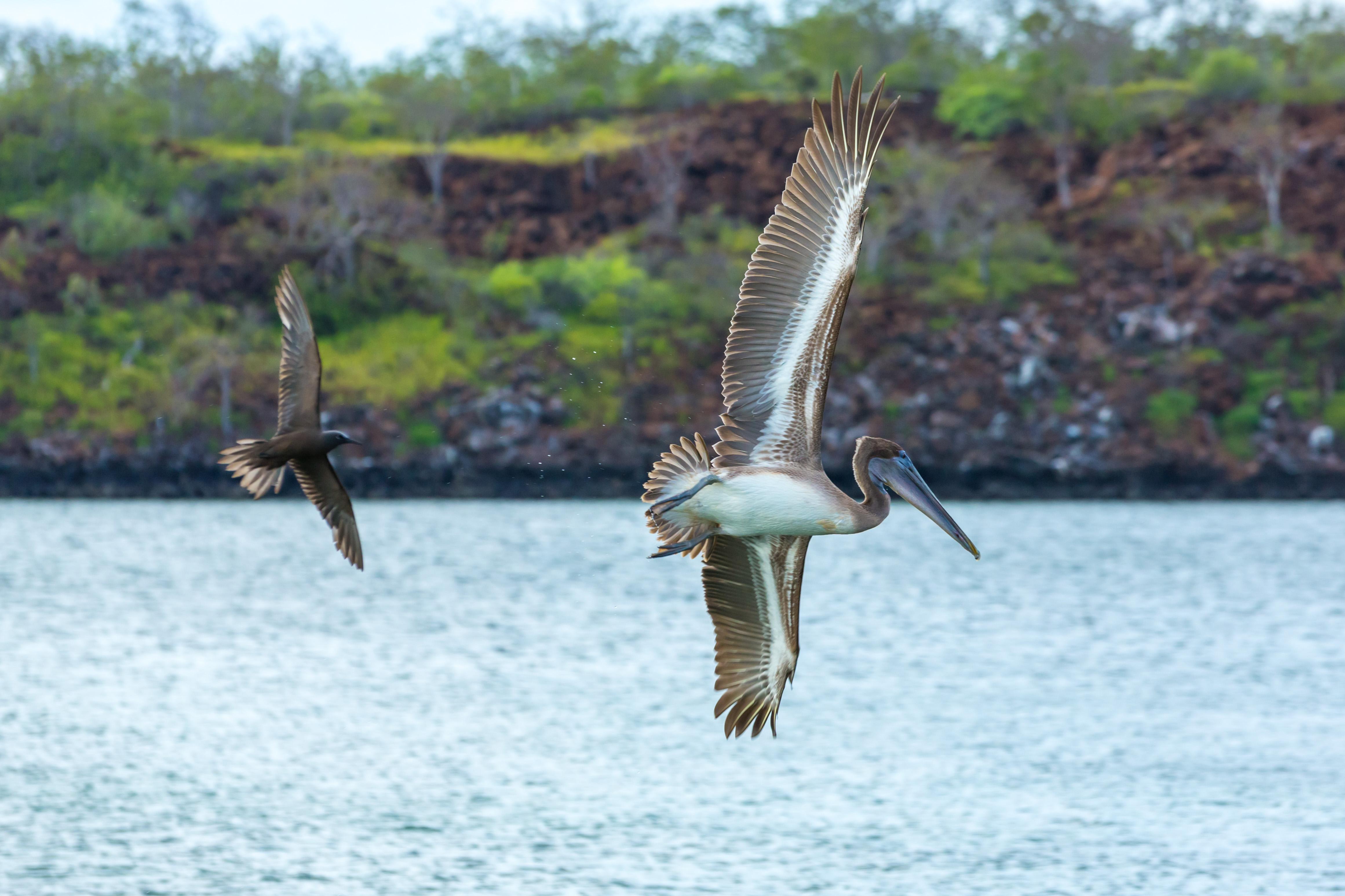 Galapagos (15 of 27).jpg
