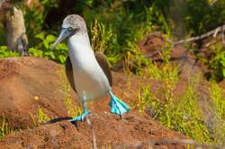 Galapagos (8 of 27).jpg