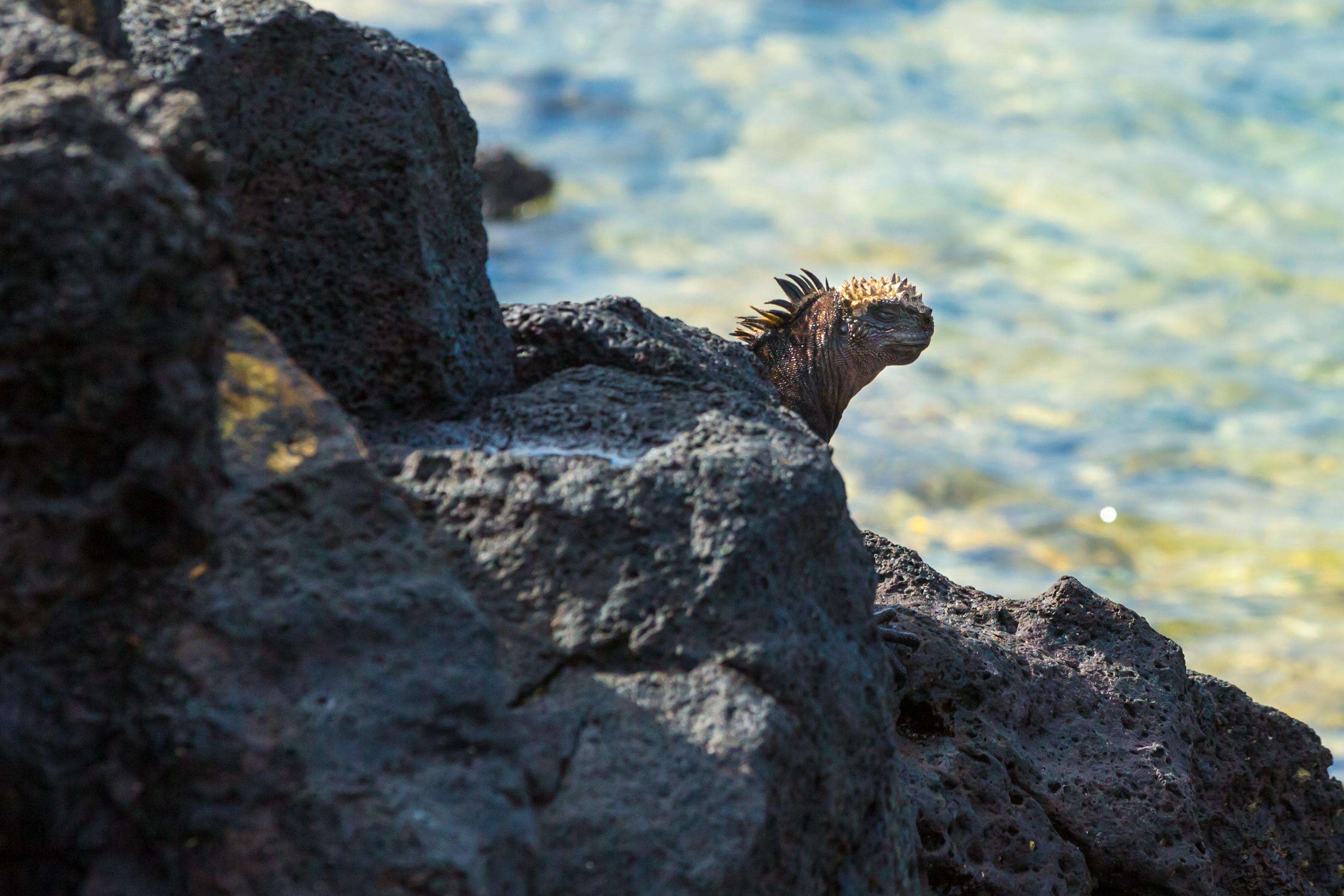 Galapagos (13 of 27).jpg