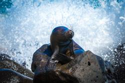 Galapagos (9 of 27).jpg