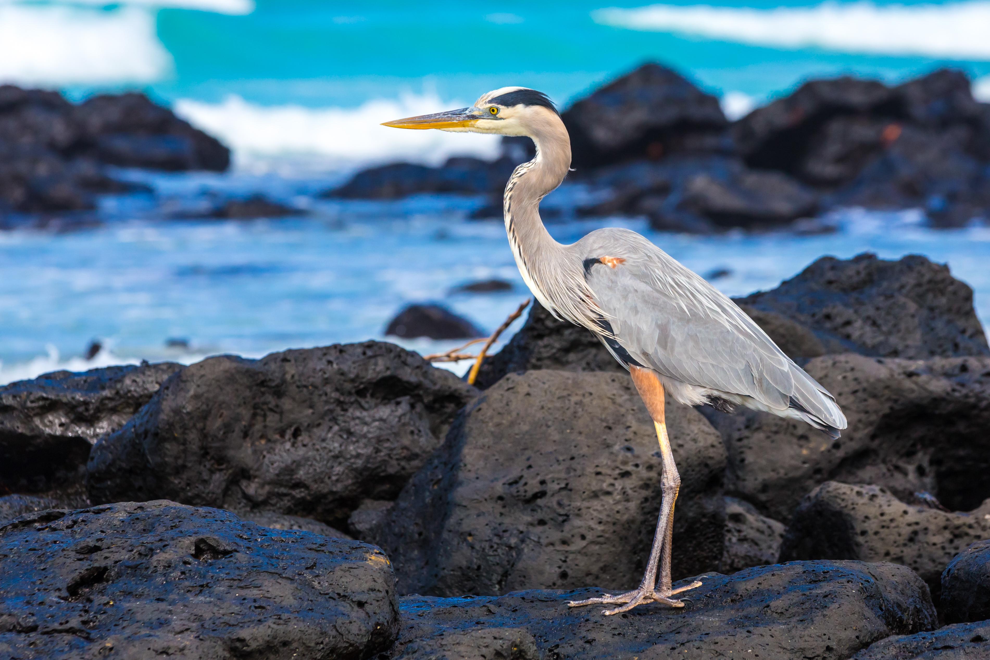 Galapagos (17 of 27).jpg