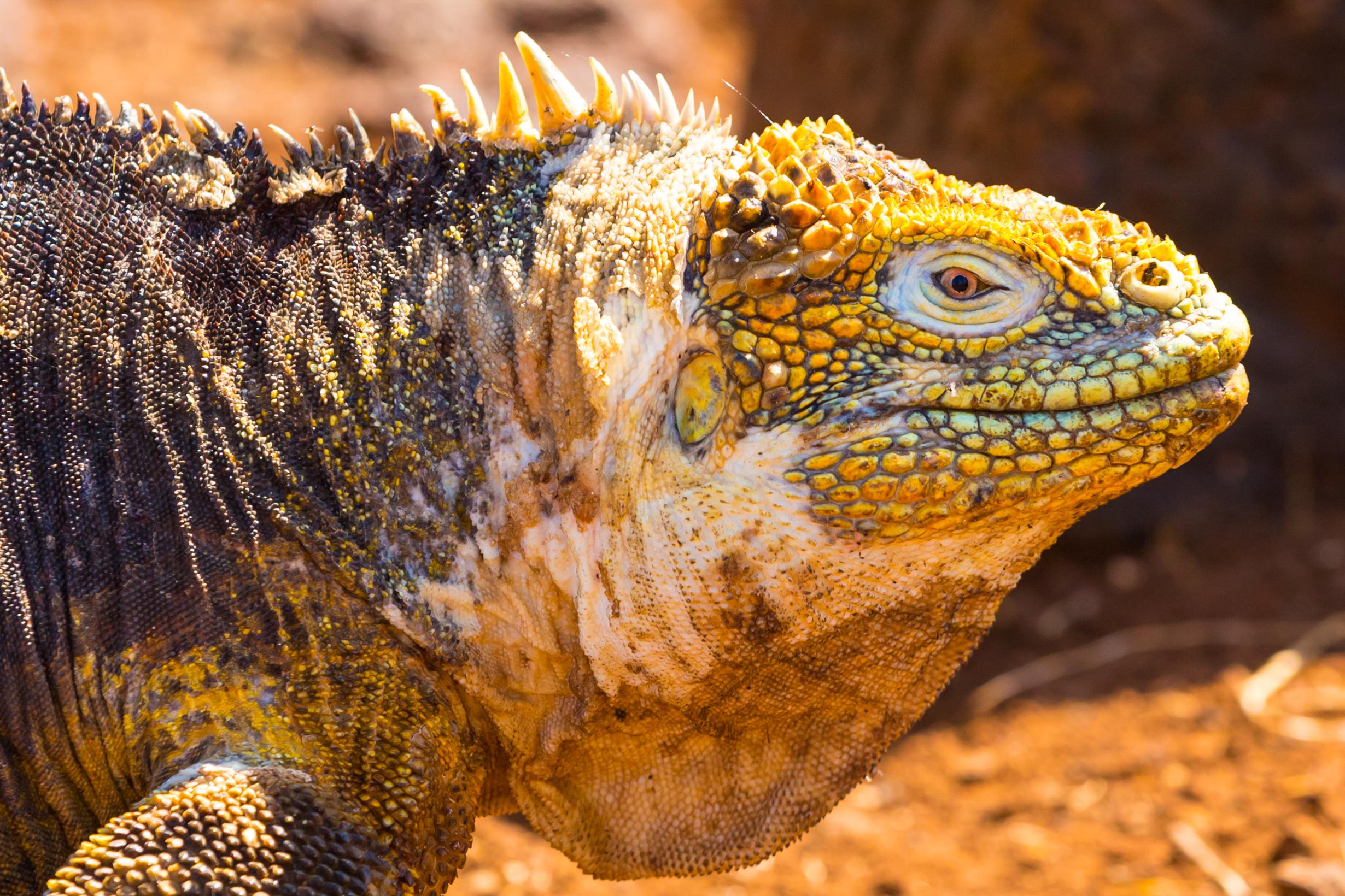 Galapagos (7 of 27).jpg