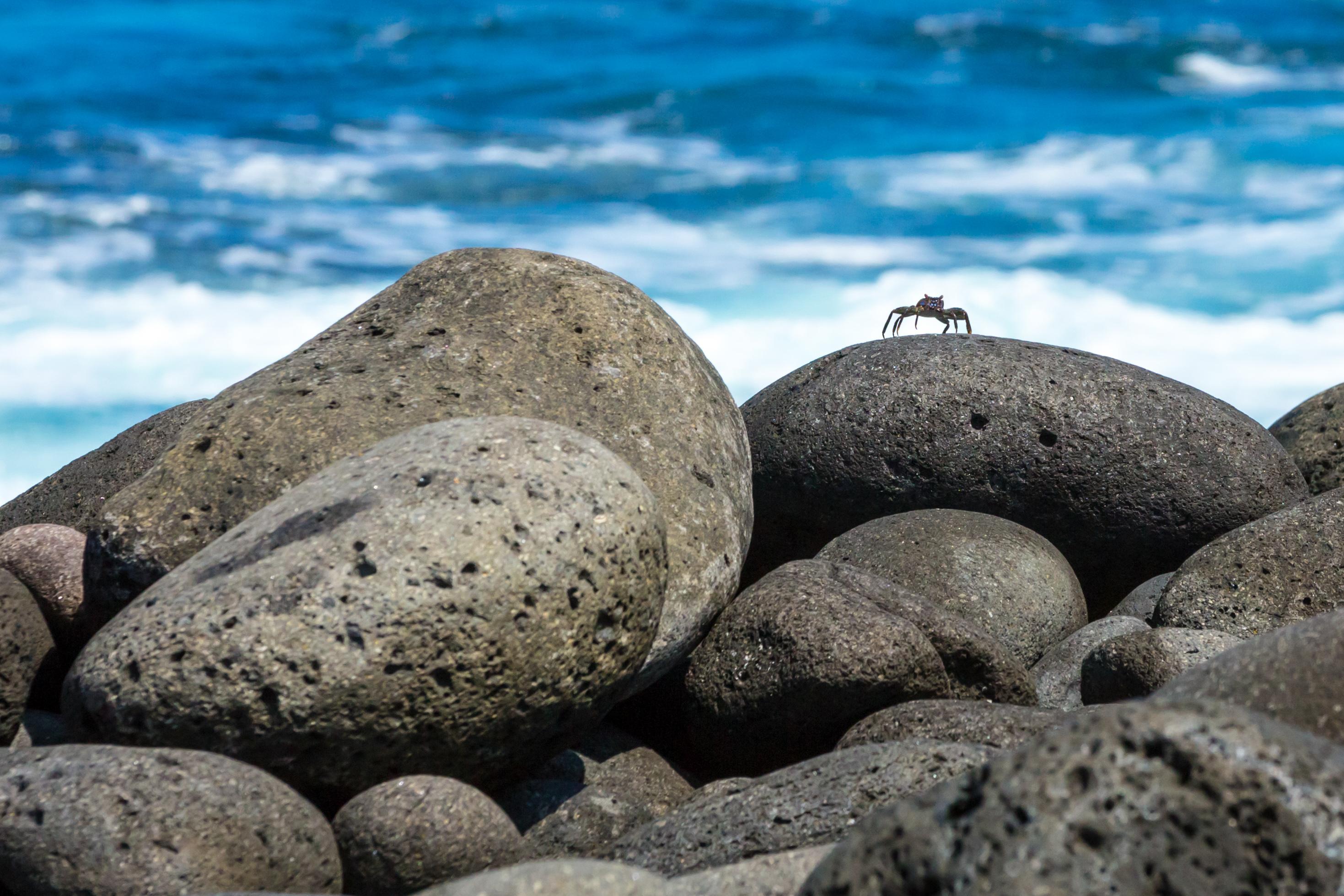 Galapagos (10 of 27).jpg