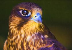 Hawk 3 No Edge.jpg