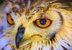 Hawk 4 No Edge.jpg