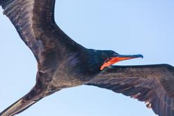 Galapagos (26 of 27).jpg