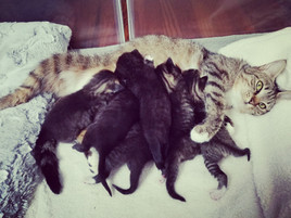 Juno and her babies