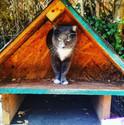 East Atlanta Colony Cats