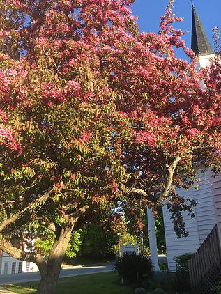 saintdavid'scherrytree.JPG