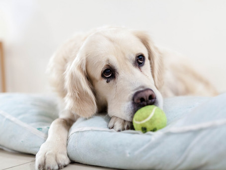 Pet Insurance: Do I Need It?