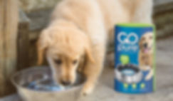 GoPure Puppy Water Purification