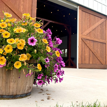 Barrel Flowers