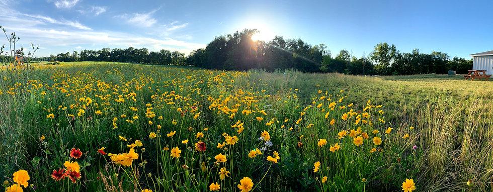 Wedding Wildflower Field