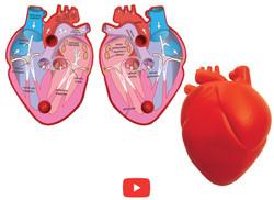 3139 Corazón Humano